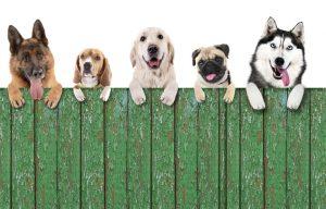 CBD for dogs Pueblo